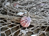 Fishing Shell Beach Fish Lake Fishing Net Sea